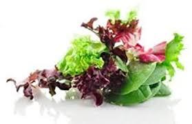 Mix Lettuce-Italy