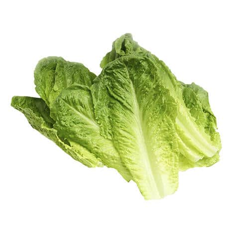 Lettuce Romain-Bulk Buy