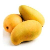 Mango-Sindri-Pakistan-Bulk Buy